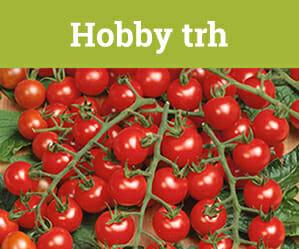 hobby trh